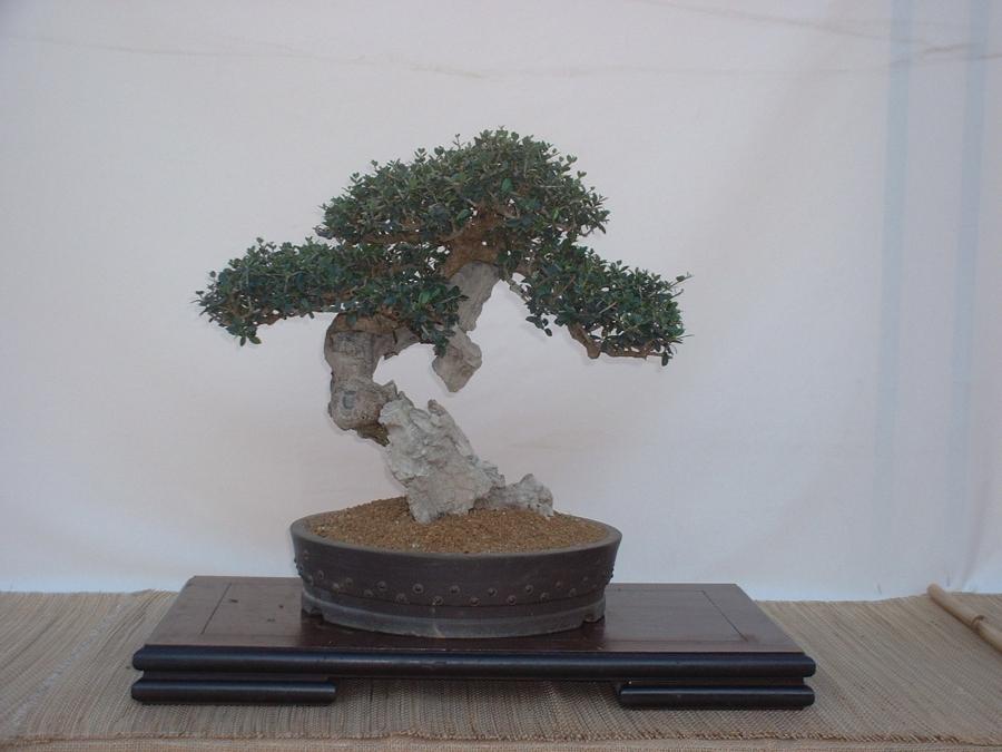 DSCF0082