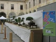 Maó+Flors 2008